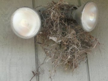 Birds' nest